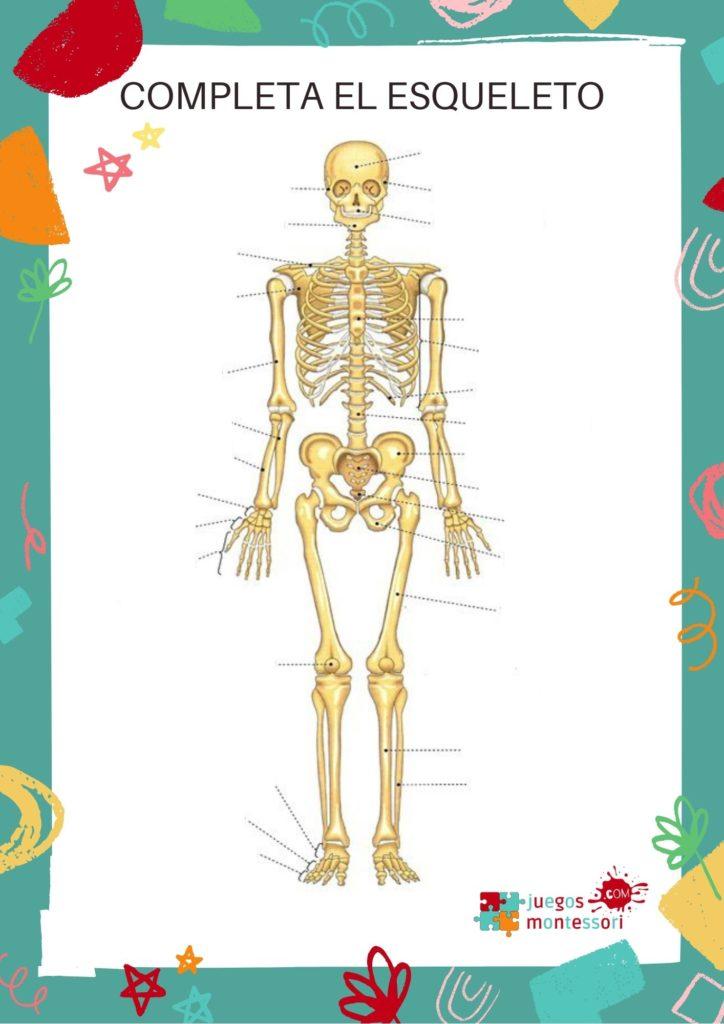 El esqueleto para completar